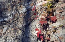 Free Autumn Leaves And Branches On Urban Wall Royalty Free Stock Image - 21672136