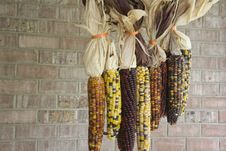 Free Close-up Of Multi-Colored Indian Corn Royalty Free Stock Photo - 21672195