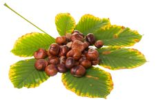 Free Horse Chestnuts Stock Photo - 21673200