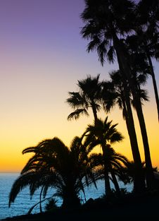 Free Palm Trees Silhouette Stock Photos - 21673203