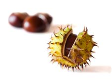 Free Chestnuts Autumn Scene Stock Image - 21674511