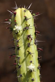 Free Cactus Stock Image - 21675021