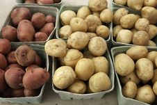 Free Potatoes Royalty Free Stock Photography - 21675097