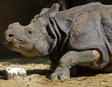 Free Rhinoceros Stock Photos - 21675193