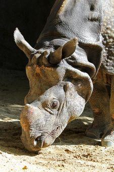 Free Rhinoceros Stock Images - 21675224