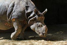 Free Rhinoceros Stock Photo - 21675250