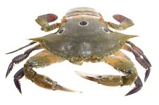 Free Crab Stock Images - 21676404