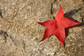 Free Red Leaf On Stone Royalty Free Stock Images - 21680449