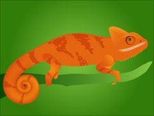 Free Chameleon Stock Image - 21681141