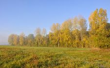Free Poplars Aligned With Golden Foliage Stock Photography - 21687022