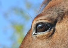 Free Close Eye On A Horse Stock Photo - 21687380