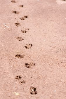 Free Footprints Stock Image - 21689341