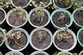 Free Nursery Little Trees Stock Images - 21691674