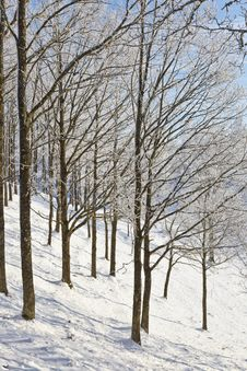 Free Winter Forest Royalty Free Stock Photos - 21693268