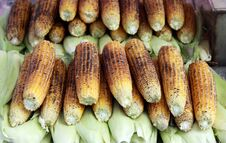 Free Roasted Corn. Royalty Free Stock Photography - 21697367
