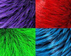 Free Fur Textures Royalty Free Stock Photo - 21698895
