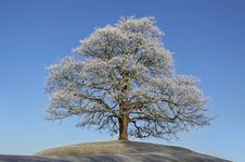Free Frosty Tree Stock Photo - 21699820