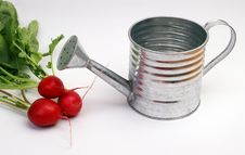 Free Radish And Metal Watering Can Stock Images - 2170694