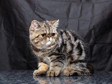 Free Kitten33 Royalty Free Stock Photos - 2170988