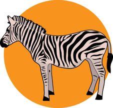 Free Zebra Royalty Free Stock Image - 2172256
