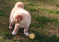 Free Small Labrador Stock Photos - 2172893