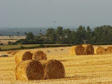 Free Flight From The Hay Bales Stock Images - 2173574