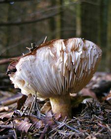 Free Mushroom Stock Image - 2174701