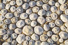 Free Shells Background Royalty Free Stock Image - 2177336