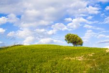 Free The Sicilian Landscape Royalty Free Stock Photography - 2178757