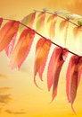 Free Autumn Leaves Royalty Free Stock Photo - 21700395