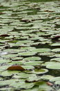 Free Pond Covered With Duckweeds Stock Image - 21707211