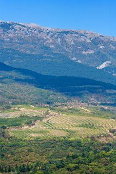 Free Vineyards On Slopes Of Mountain Stock Photo - 21700070