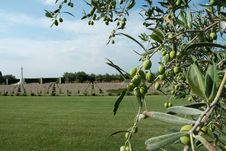 British Military Memorial And Olive Tree Stock Photo