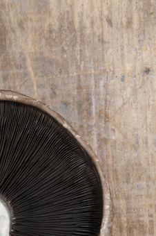 Free Mushroom Royalty Free Stock Image - 21704126