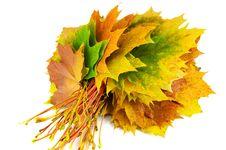 Free Autumn Yellow Leaves Royalty Free Stock Photos - 21705248
