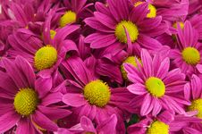 Free Beautiful Pink Bell Flowers Background Royalty Free Stock Image - 21705516