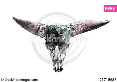 Free Skull Of A Bull. Stock Photos - 21718663