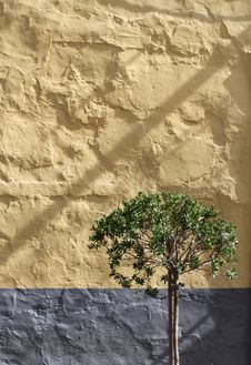 Free Olive Tree Against Stone Wall Royalty Free Stock Photos - 21714178