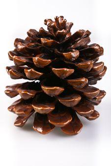 Free A Big Cone Stock Image - 21714801
