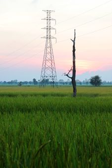 High Voltage Post In Rice Field Before Sunset Royalty Free Stock Image