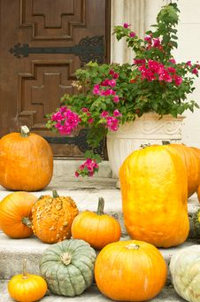 Free Pumpkins And Bougainvilla:  Halloween In The South Royalty Free Stock Images - 21719459