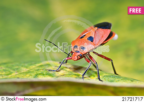 Free Defecate Bug Royalty Free Stock Photography - 21721717