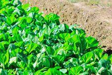 Free Vegetable Garden Stock Photos - 21722213