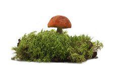 Free Mushrooms Stock Photos - 21723763