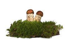 Free Mushrooms Royalty Free Stock Photos - 21723788
