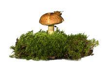 Free Mushrooms Royalty Free Stock Photos - 21723808