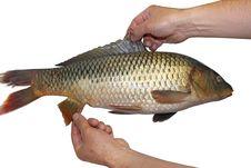 Free Fresh Fish Royalty Free Stock Image - 21725556