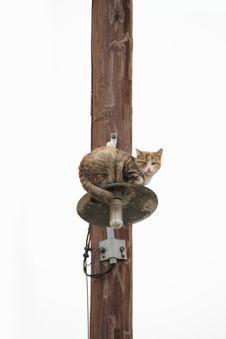 Free Stray Cat Royalty Free Stock Photo - 21728675