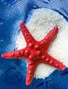 Free Starfish Stock Photo - 21731130