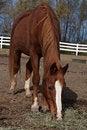 Free Horse Eating Royalty Free Stock Photos - 21731838